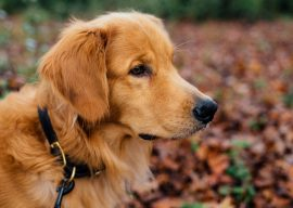 Riverbrook to Host Therapy Dog Classes!